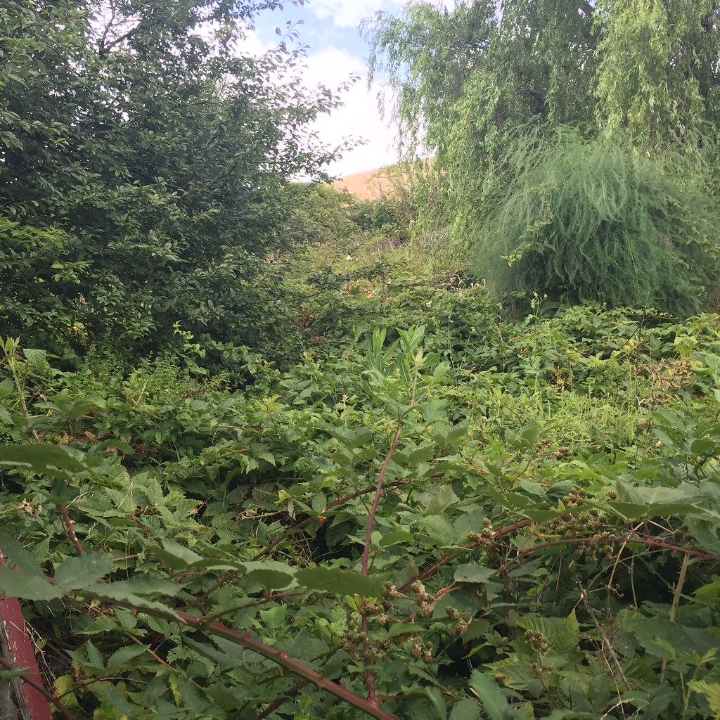 incredibly overgrown backyard at a property we are looking to buy in the country