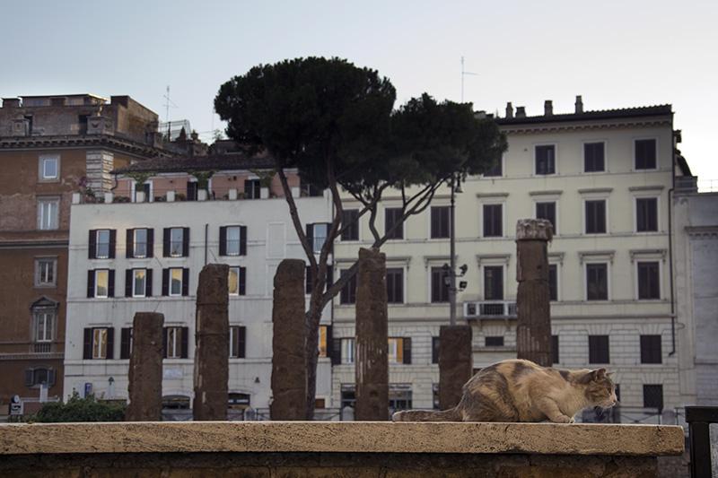 Rome Largo Argentina