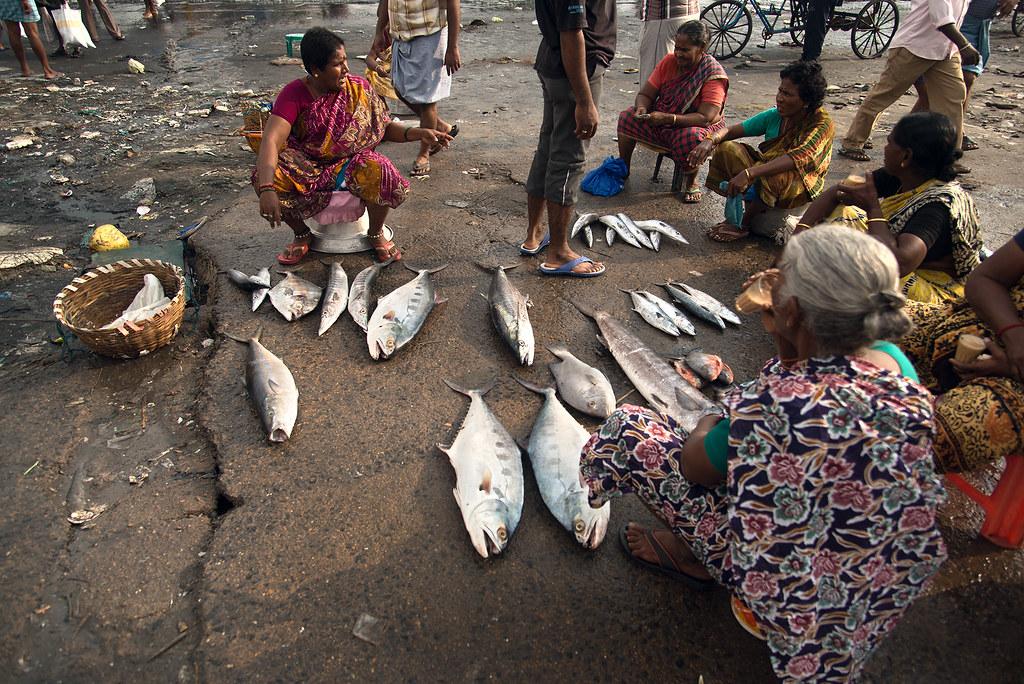 Kasimedu Fish Market Kasimedu Chennai India