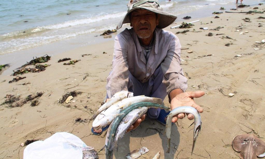 越南魚群暴斃。(圖片來源:STR/AFP/Getty Images)