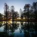 Syon Park Gardens Winter Sunrise by Simon Hadleigh-Sparks