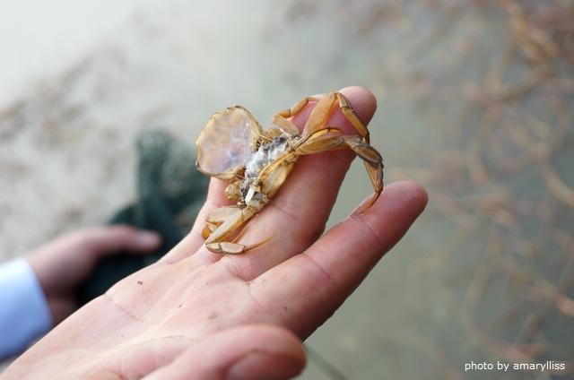牧牛湖大閘蟹生態養殖直擊(獨享85折優惠) @amarylliss。艾瑪[隨處走走]