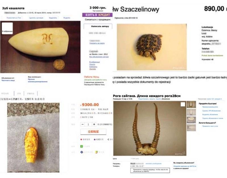 網路購物充斥野生動物商品,總值高達7百萬英鎊。(來源:IFAW)