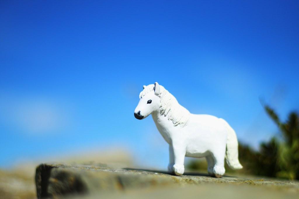 The Dogs of Greenhill Farm: Honey, I Shrunk the Pony