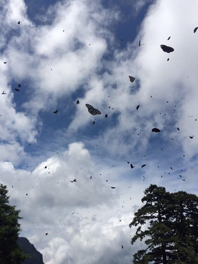 鋪天蓋地而來的紫斑蝶。圖片來源:玉山國家公園管理處提供