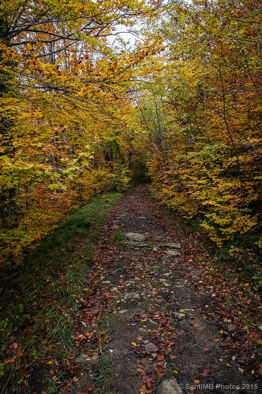 Rodeados de otoño