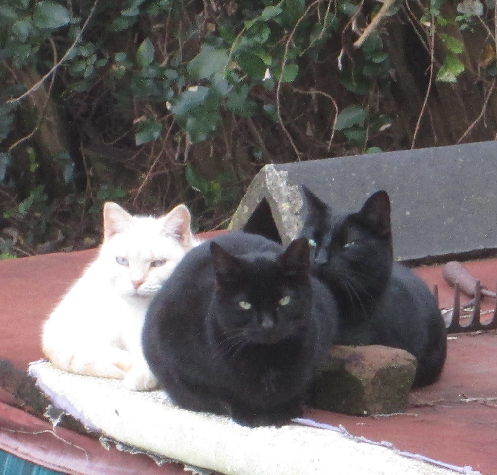 Cats In The Back Yard