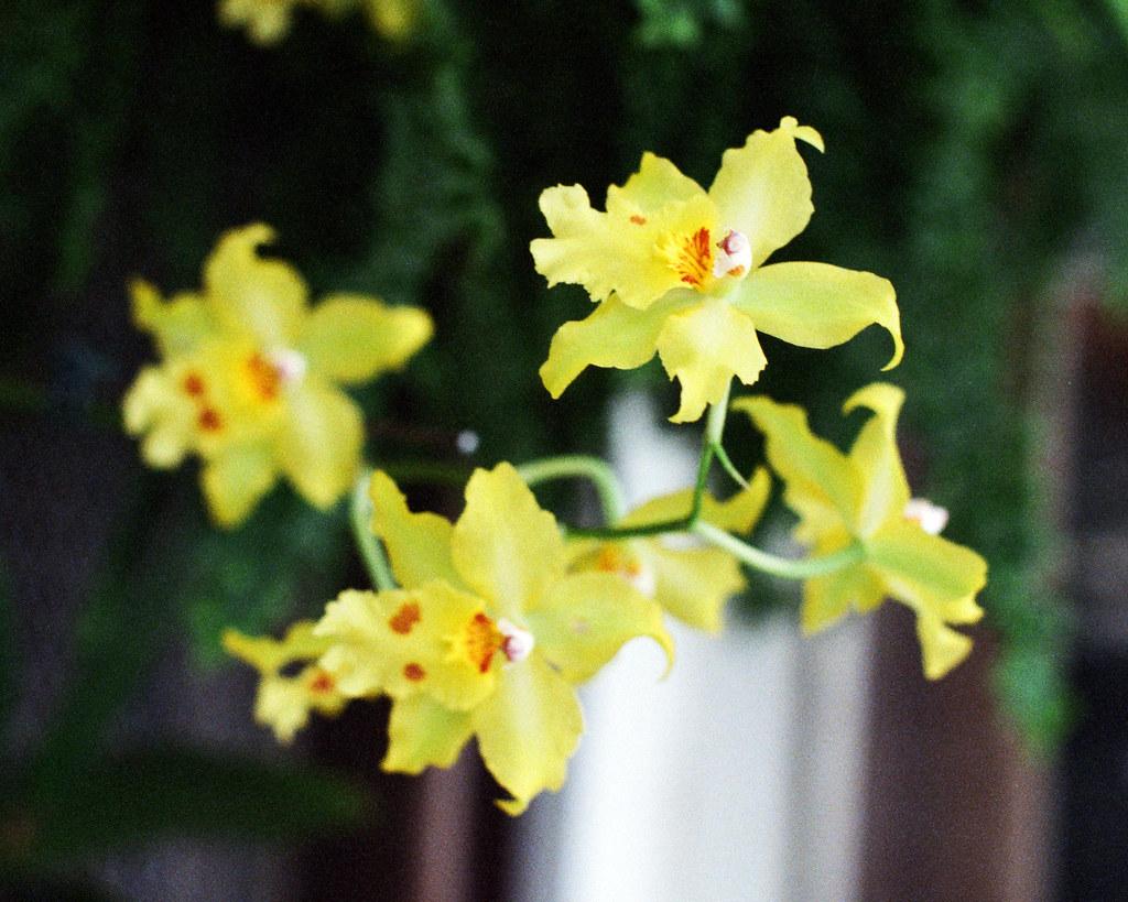 Hothouse flowers Pentax ME SMC Pentax M 50mm f 1 4 Fujifil…
