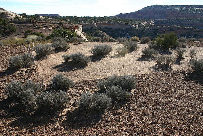 Science on the Hill:  Fragile life underfoot has big impact on desert