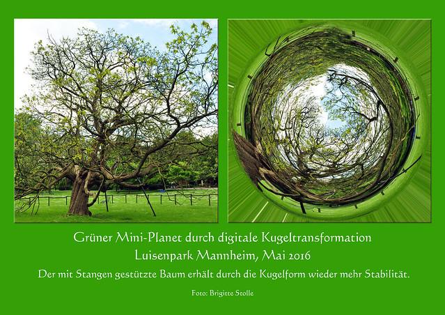 Grüner Miniplanet durch digitale Kugeltransformation Luisenpark Mannheim Mai 2016 digitales Fotolabor Polarkoordinatenfilter Foto Brigitte Stolle Mannheim 2016
