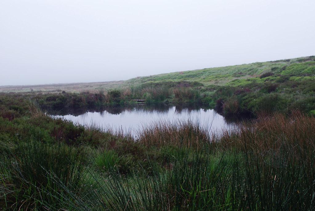 dew pond mist dreaming