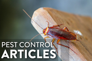 PEST CONTROL articles
