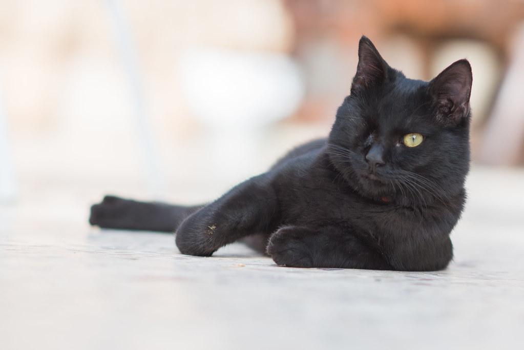One Eyed Cat Maxtoy