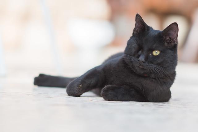 Jordan Black Cat