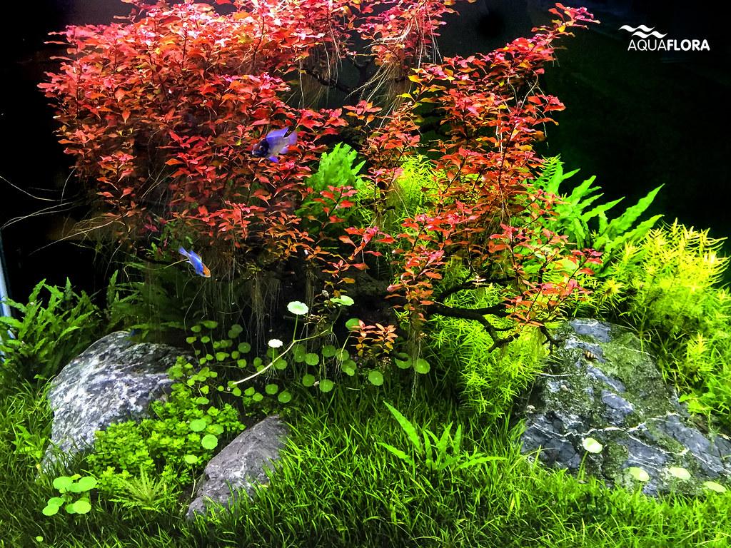Update Jan 2015 Red Bonsai Treescape Aquaflora S