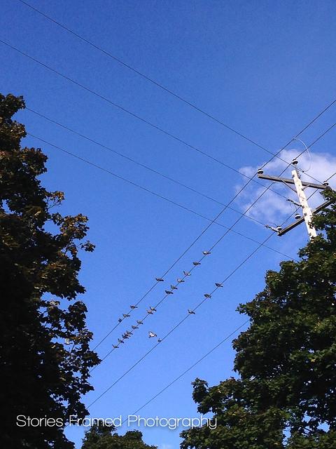 274. | the birds.