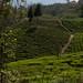 Nepal Drive 71