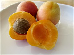 Freshly-picked apricots