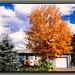 (139/365) Fall Colors of New England's Peak Foliage Season