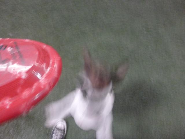 08/22/16 Frisbee Fetch :D