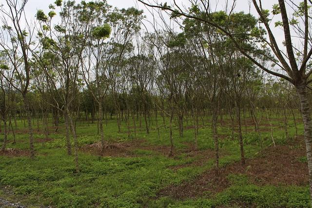 林木需求一部分來自人工林,同時輔導認證標章。攝影:廖靜蕙