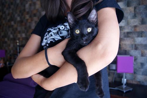 Selva, gatita Pantera guapa, estilizada y divertida esterilizada, nacida en Mayo´16, en adopción. Valencia. ADOPTADA. 29208203525_fc315a0ea7