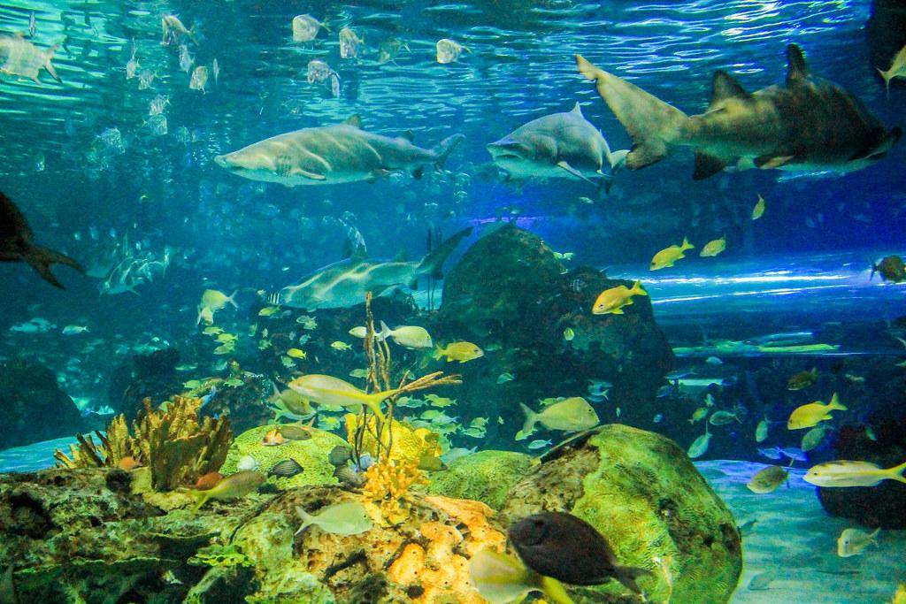 Ripley S Aquarium Restaurant Review