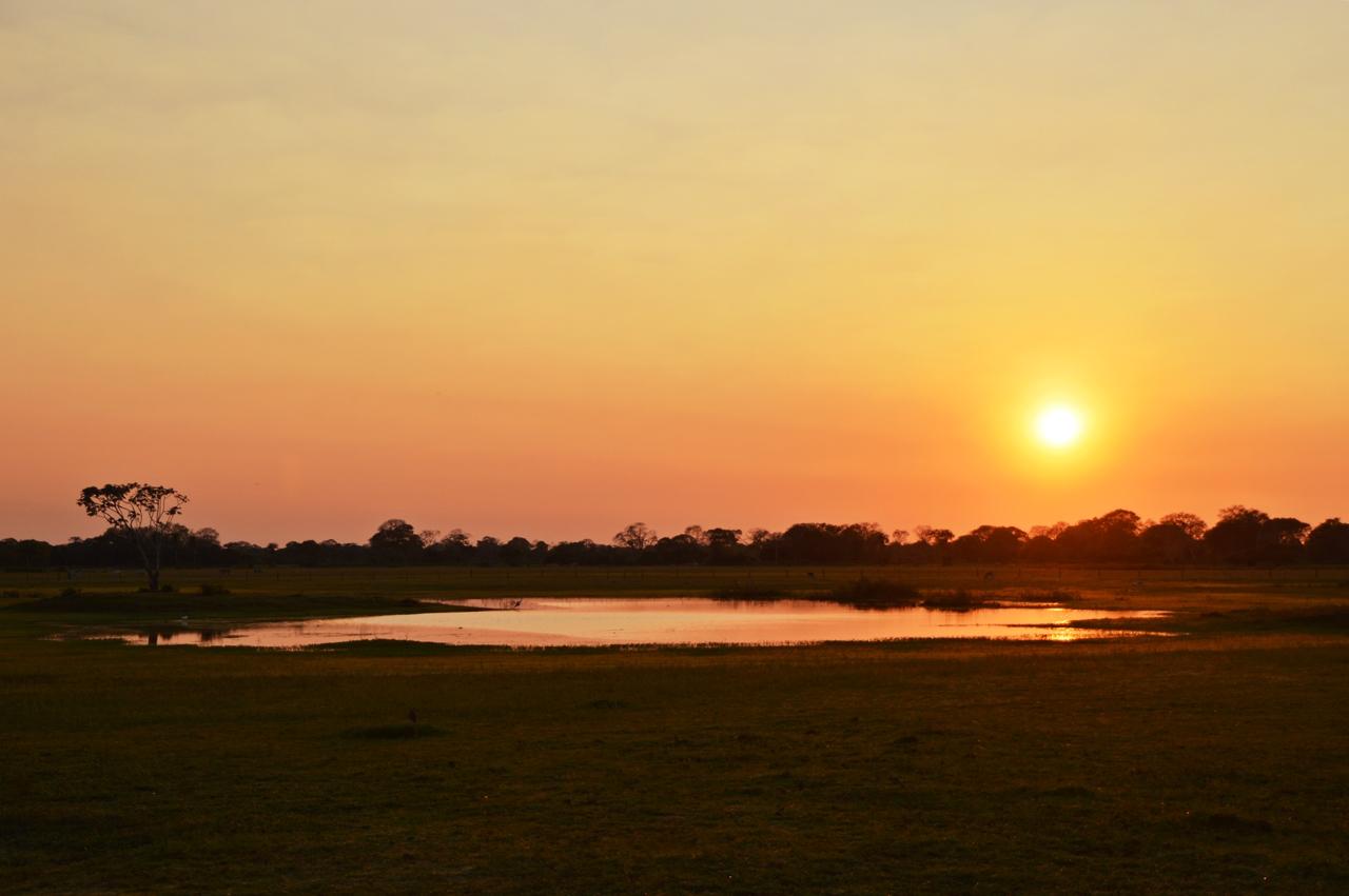 pantanal25