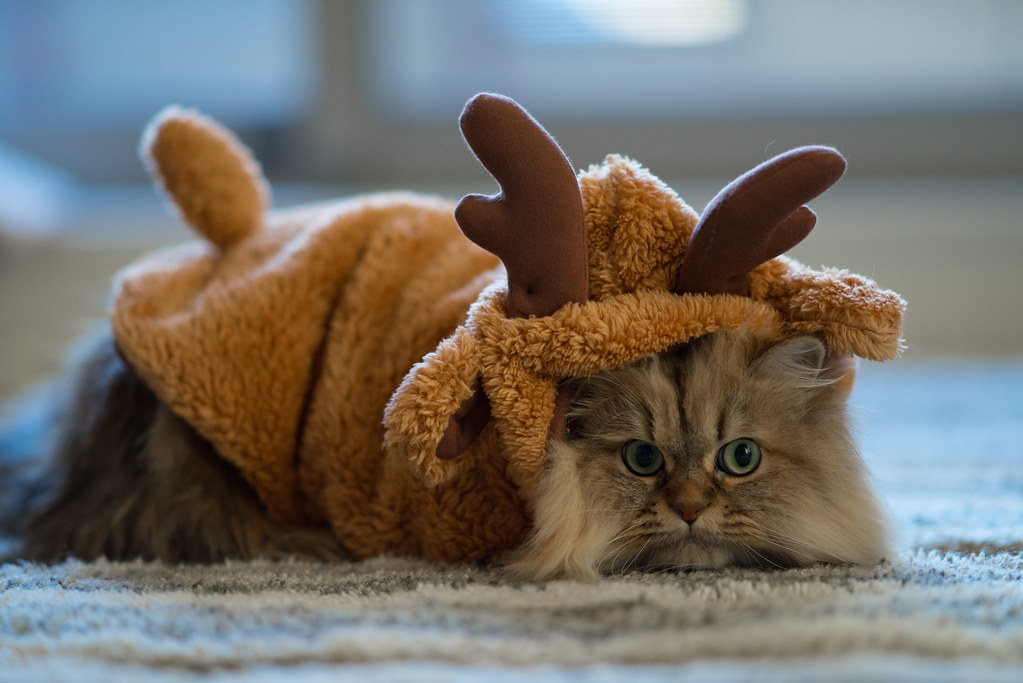 Sad Reindeer | Ben Torode | Flickr