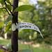 Kahinta Plum Tree
