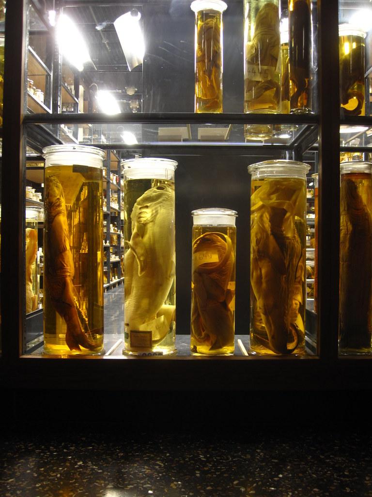 Museum für Naturkunde - Wet Room | The big bottles in the ...