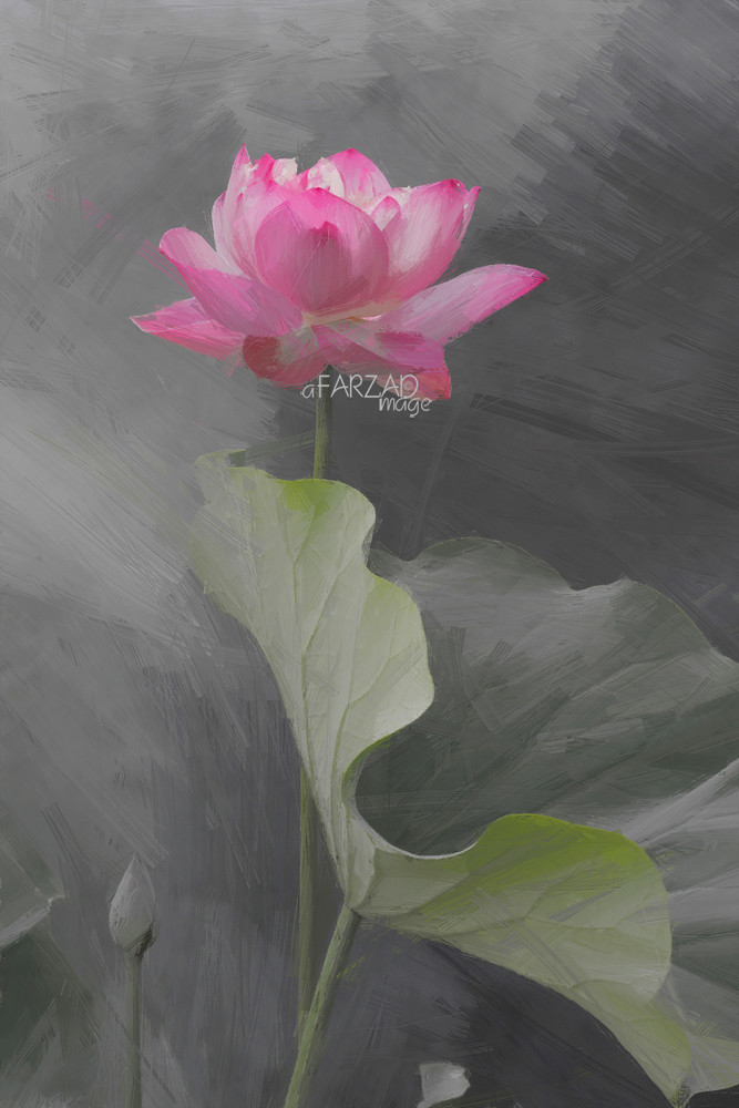Lotus Flower Art Lotus Flower Oi...