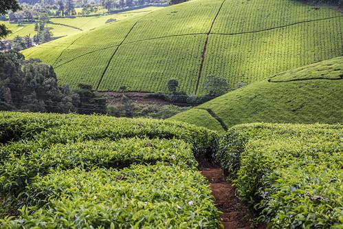 Agritech Challenge Aimed At Inspiring Innovation In Kenya