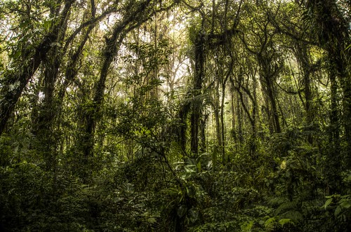 Jungle Vines, Monteverde