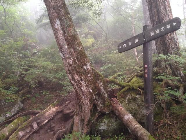 鳳凰山 ドンドコ沢 登山道