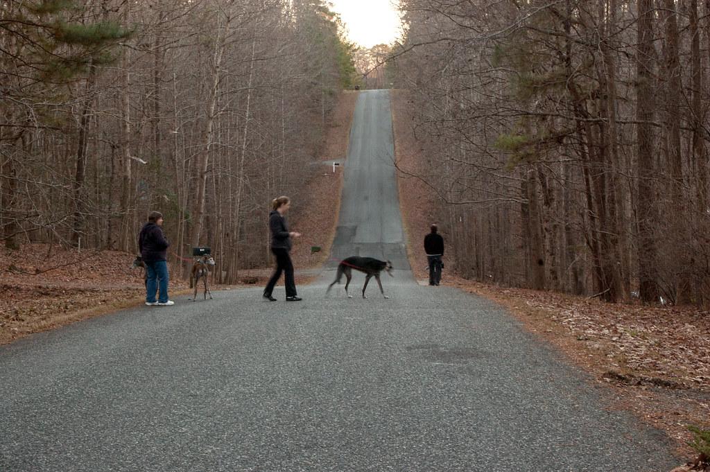 Dogs Day Walking Companycheck