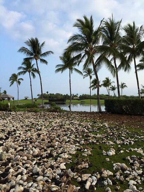 Beach Orchid Hotel Kollam Tariff