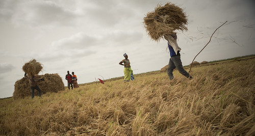 Farmers in senegal with their harvest