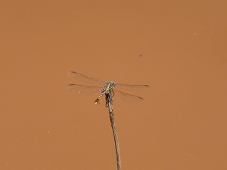 dragonfly wichita falls texas