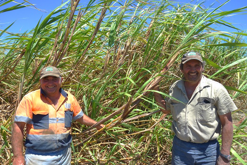Michael and John Attard and a good crop of sugarcane