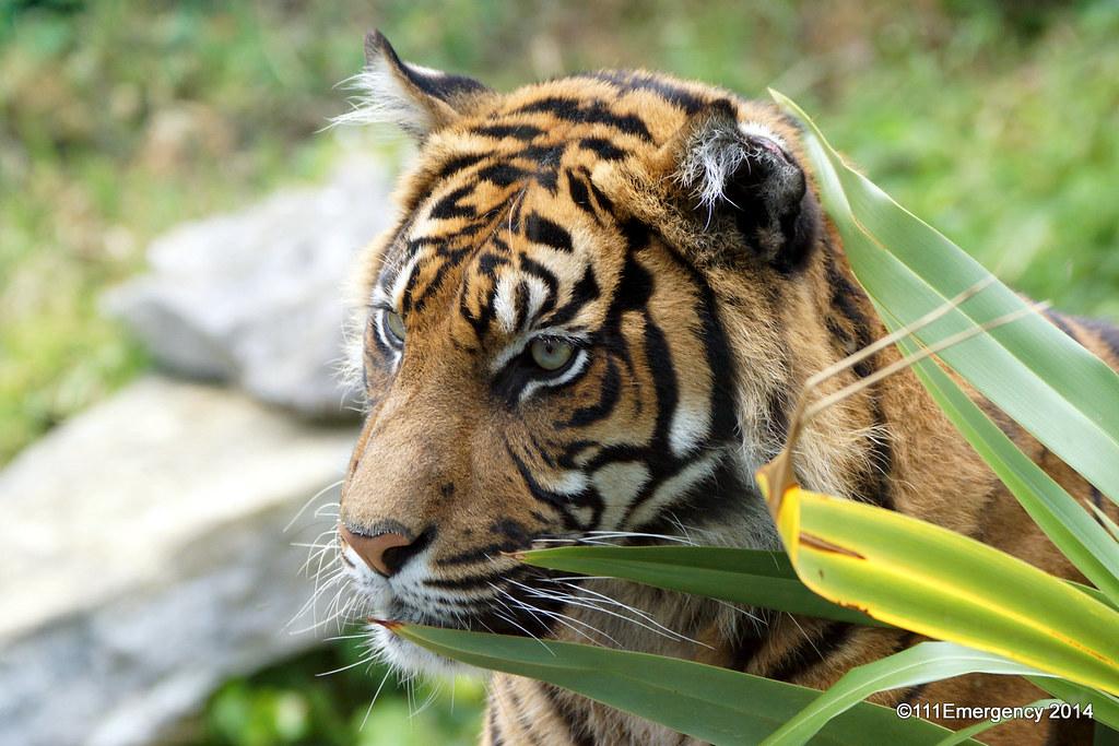 Wellington Zoo | Flickr - Photo Sharing!