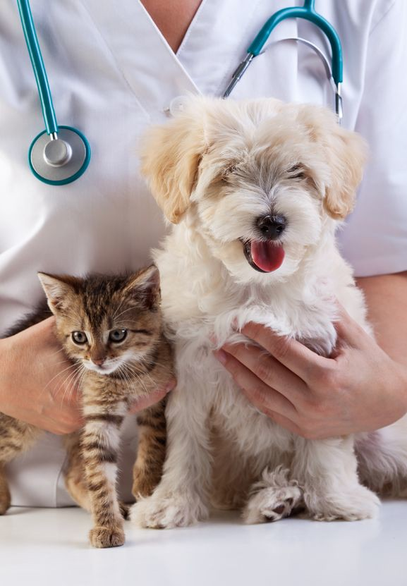 Free Checkup For Cats