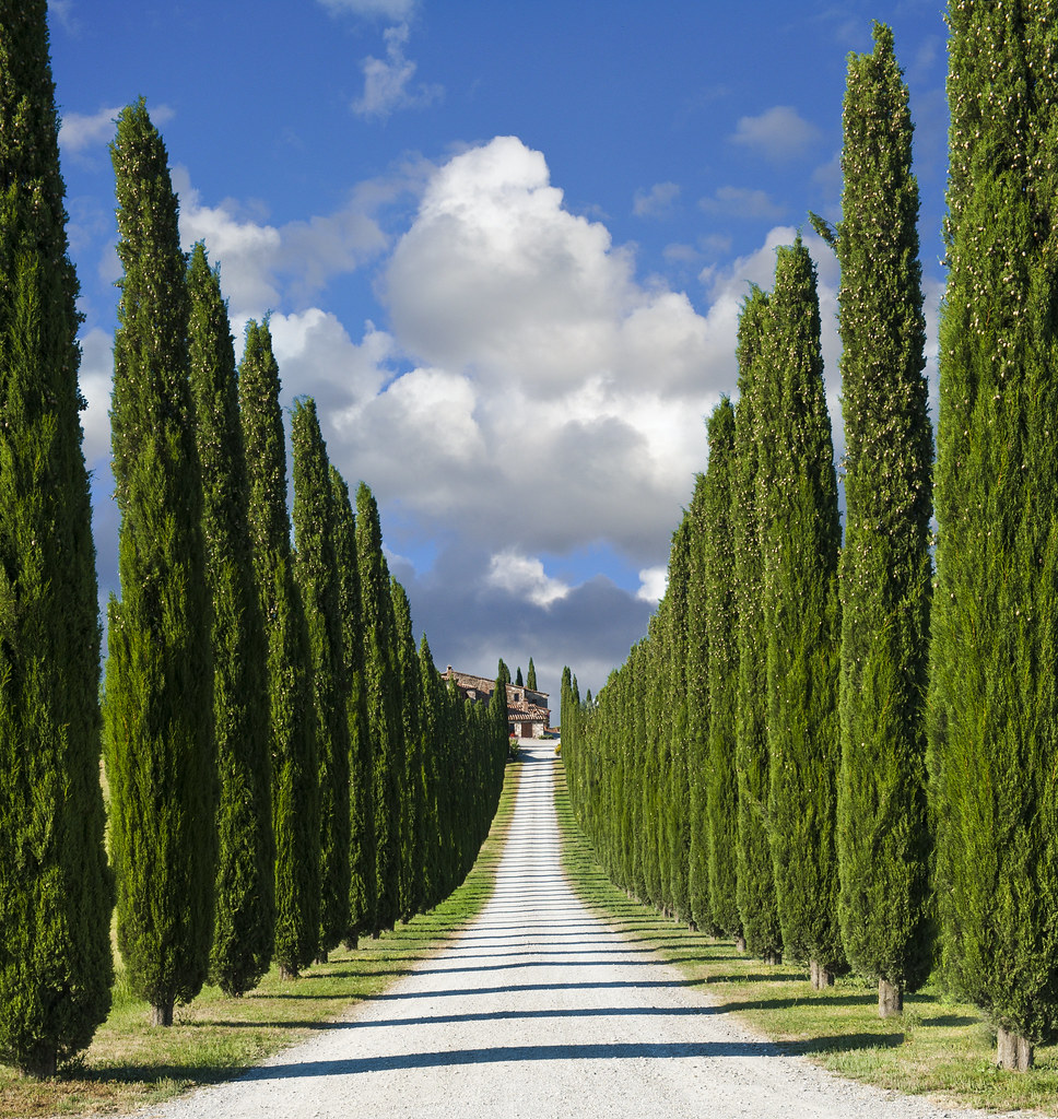 zypressen allee in der toskana alley of cypresses in the. Black Bedroom Furniture Sets. Home Design Ideas