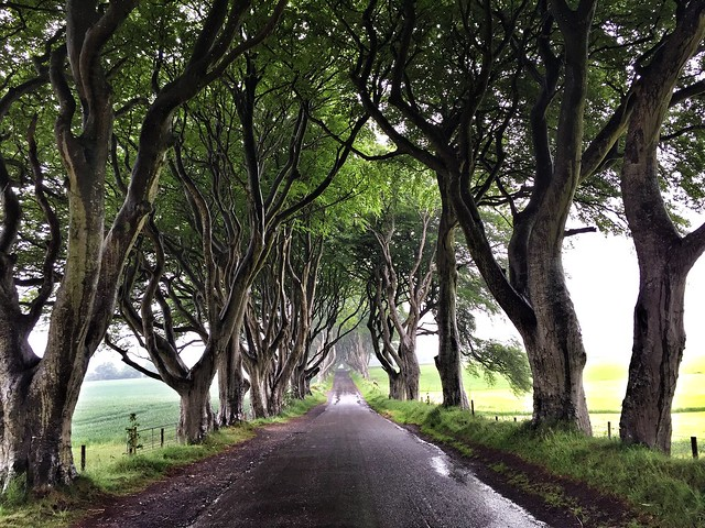 The Dark Hedges (Juego de tronos en Irlanda del Norte)