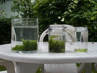 foto 2 Le alghe sono sul fondo