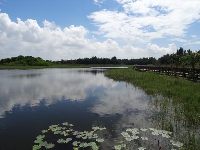 南堤人工濕地與木棧道。圖片來源:嘉義林管處
