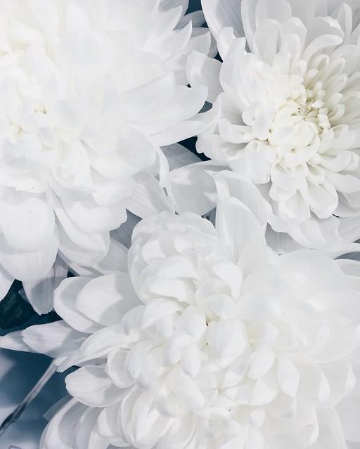 Untitled, kesä, summer, holiday, loma, summer holiday, kesäloma, kukat, flowers, life, elämä, hydrangea bouquets, hortensia kimppu, pastelli väri, shade, color, pastel, vaaleanpunainen, pinkki, valkoinen, white, sininen, blue, pastel blue, pastel pink, holiday starts, loman alku, honor of, kunniaksi,