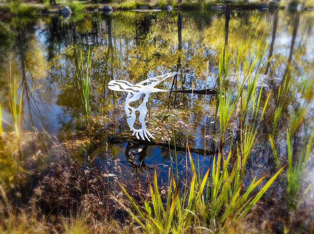 Trumpeter Swan By John Summs Yampa River Botanic Garden S Flickr