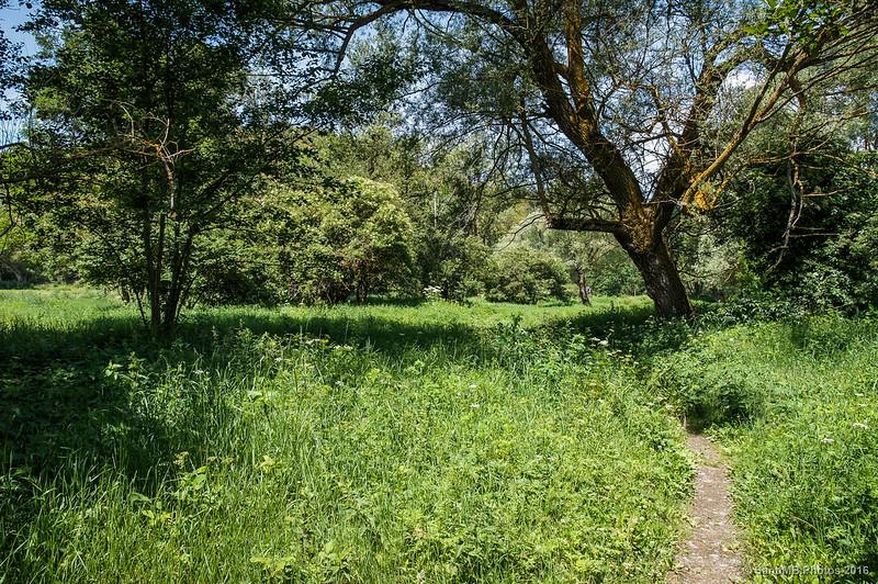 El camino de las Basses de Gallissà