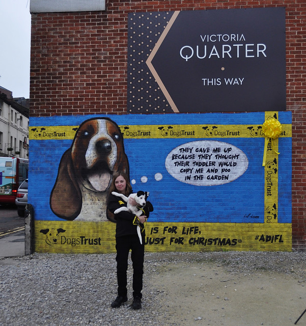Dogs Home Leeds